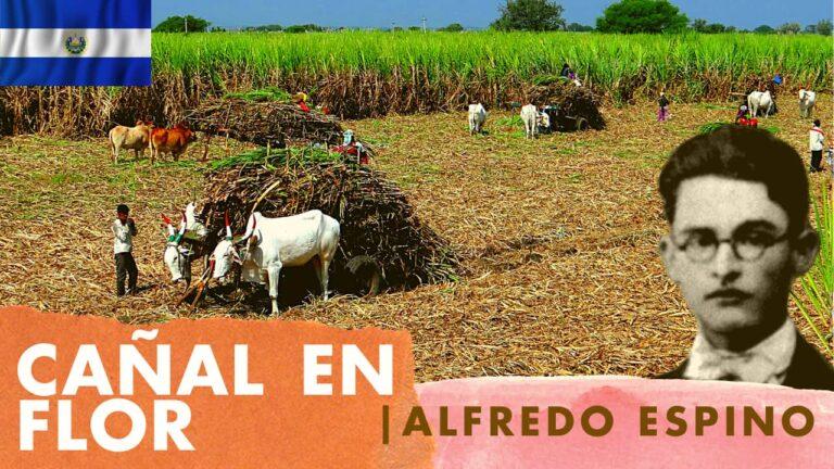 Lee más sobre el artículo Cañal en Flor Alfredo Espino