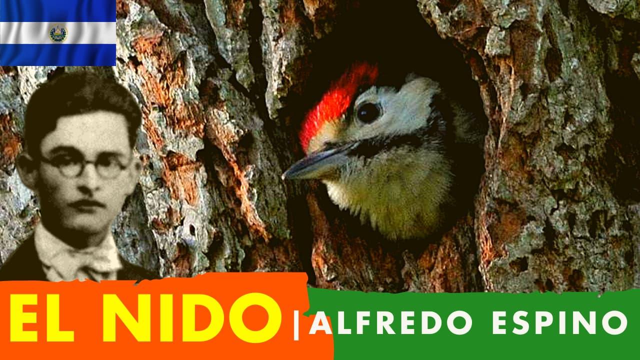 En este momento estás viendo El Nido Alfredo Espino