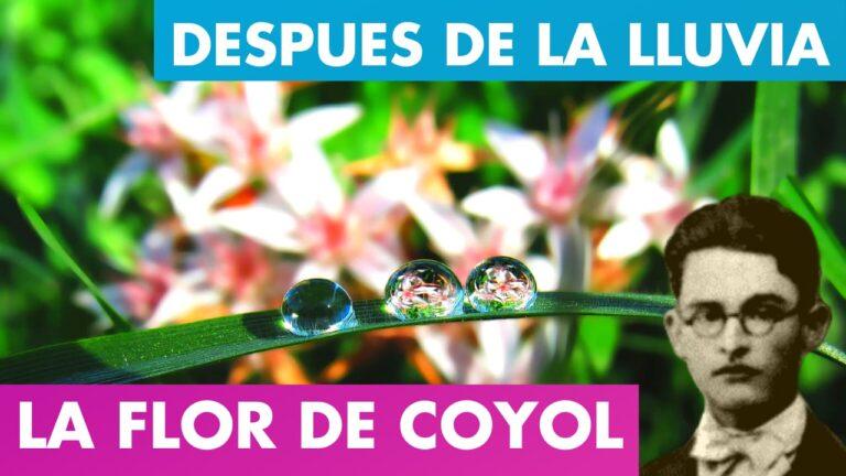 Lee más sobre el artículo Al Entreabrirse La Flor de Coyol – Después de La Lluvia Alfredo Espino