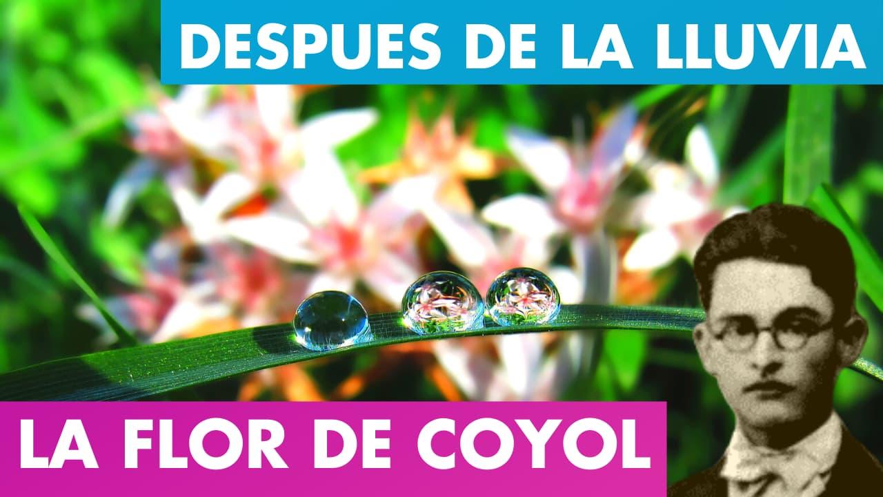 En este momento estás viendo Al Entreabrirse La Flor de Coyol – Después de La Lluvia Alfredo Espino